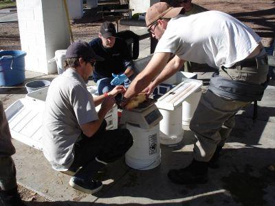 scientific fish processing