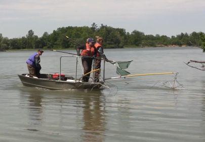 boat electrofishing crew position
