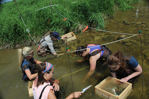 rainbow trout mussel relocation