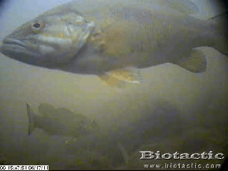 underwater camera smallmouth bass