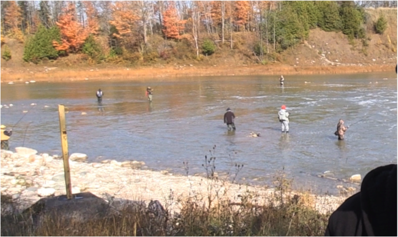rainbow trout anglers fall